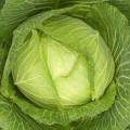 Что можно приготовить из капусты